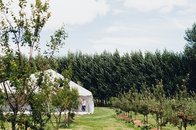 Marquee wedding in vineyard
