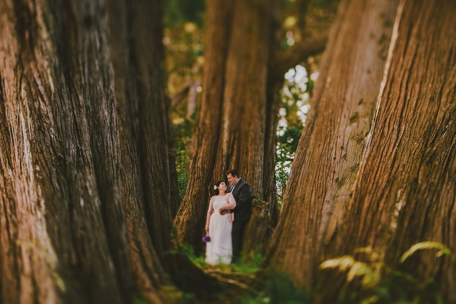big trees bride groom